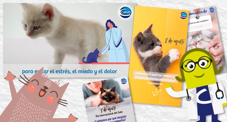 Todo listo para una acción en redes sociales con motivo del Día Internacional del Gato
