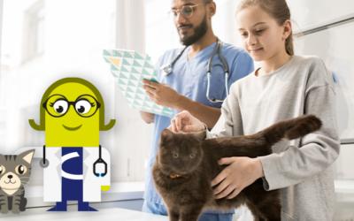 Estrategias de comunicación para atraer pacientes felinos (I)